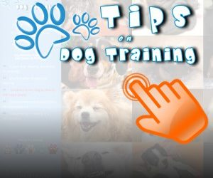 Dog Training Affiliate Website Design and Promotion